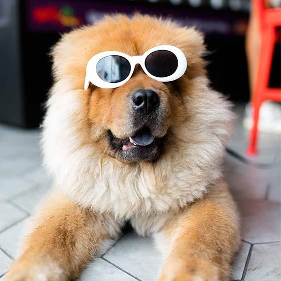 Fun Dogs Daphne